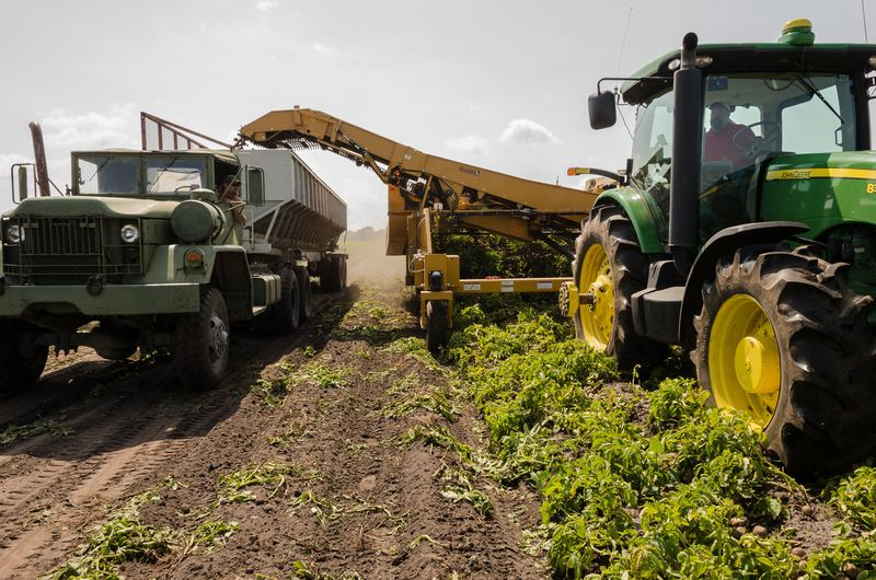 Gemuse Anbau und Ernte