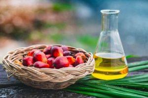 zrównoważona produkcja oleju palmowego