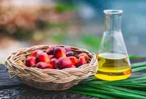 olej palmowy - zrownowazona produkcja